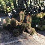 Foto de Jardín Botánico
