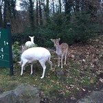 Sehr gepflegter, tierfreundlicher, mit liebe geführter Park!