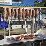 Grouper and Snapper heaven!