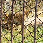 Photo of Samutprakan Crocodile Farm and Zoo