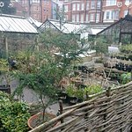 Photo of Chelsea Physic Garden