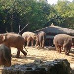 Photo de Chimelong Safari Park