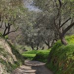 The driveway to Kaliyoga through surrounding olive groves