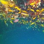 Photo de Valm Dive Shop