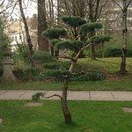 un arbre bien soigné