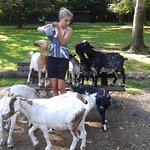 Hongerige geiten