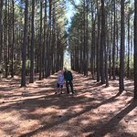 The row of pines is a feature on my IG feed. Glad to have found it here in Nacogdoches!