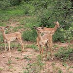 Photo of Mkhaya Endangered Species