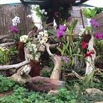 Photo of Jardin de Orquideas de Sitio Litre