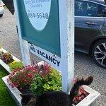 Door cat.