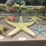 Foto de Stones 'n Bones Museum