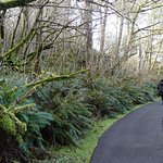 Trail from Parking Lot (State Park pass required for free parking) to Interpretive Center