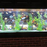 Tropical fish entertain patrons