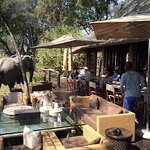 An elephant came to lunch