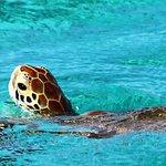 Tobago Cays Foto