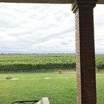 Photo of The Vines of Mendoza