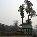 Teesta tree house