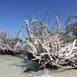 Foto de Happy Paddler Kayak Tours & EcoVentures