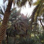 Photo of Al Ain Oasis