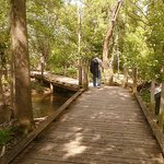 Peaceful boardwalk trails refresh one's soul in the most glorious ways! You'll be hooked like me