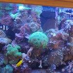 Fish tank - everyone loves it