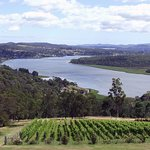 Vine yard and Tamar River Valley