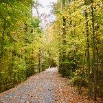 Mid-Lothian Mines Park - Fall