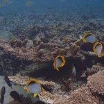 Le Morne Aquarium