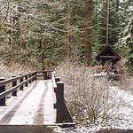 Snowy trip to Silver Falls Campground Cabins.