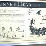 Photo of Dunnet Head