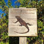 Photo de Iguana Crossing