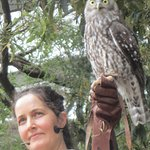 I was very concerned about this owl at Healesville that was participating in a show during the d