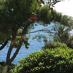 Photo de Hotel Croatia Cavtat