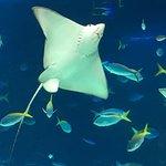Foto de Sunshine Aquarium
