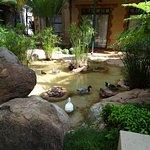 Wasser mit Enten