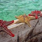Stelle merine barriera corallina antistante il villaggio