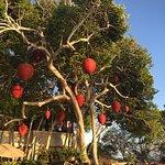 Foto de Banyan Tree Cabo Marqués