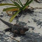 Iguana Isalnd