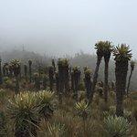 Foto de Nevado del Ruiz