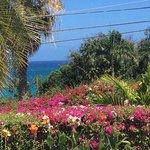 Garden foliage around Villa