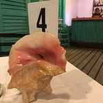 Photo of Queen Conch