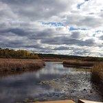 Beautiful view of the marsh 1