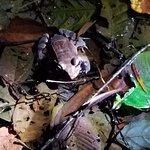 Foto di Arenal Oasis Wildlife Refuge