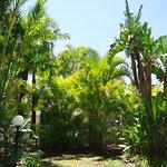 Our lush tropical gardens