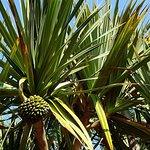 Photo de Tropical Flower Garden