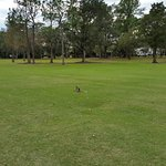 Photo of Rio Pinar Country Club