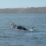 Photo of Southern Spirit Cruises (Whale watching)