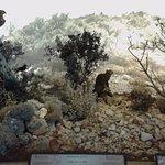Θαμνότοπος Κρήτης