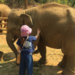 You get really close to the elephants