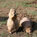 Photo de Zoo Santo Inácio